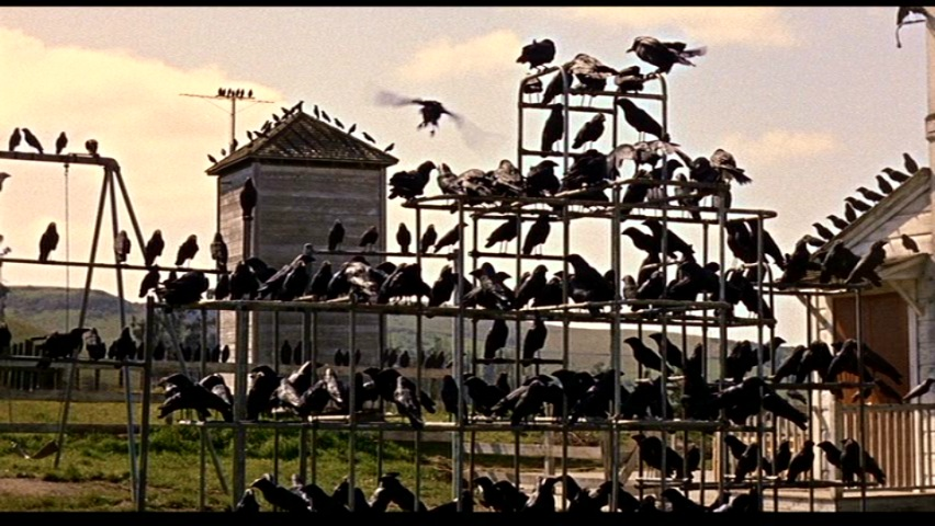 The early bird always catches the worm (especially when you are on the set of Alfred Hitchcock's The Birds)