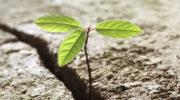Rachel Arkle: 3 things to ask yourself about resilience