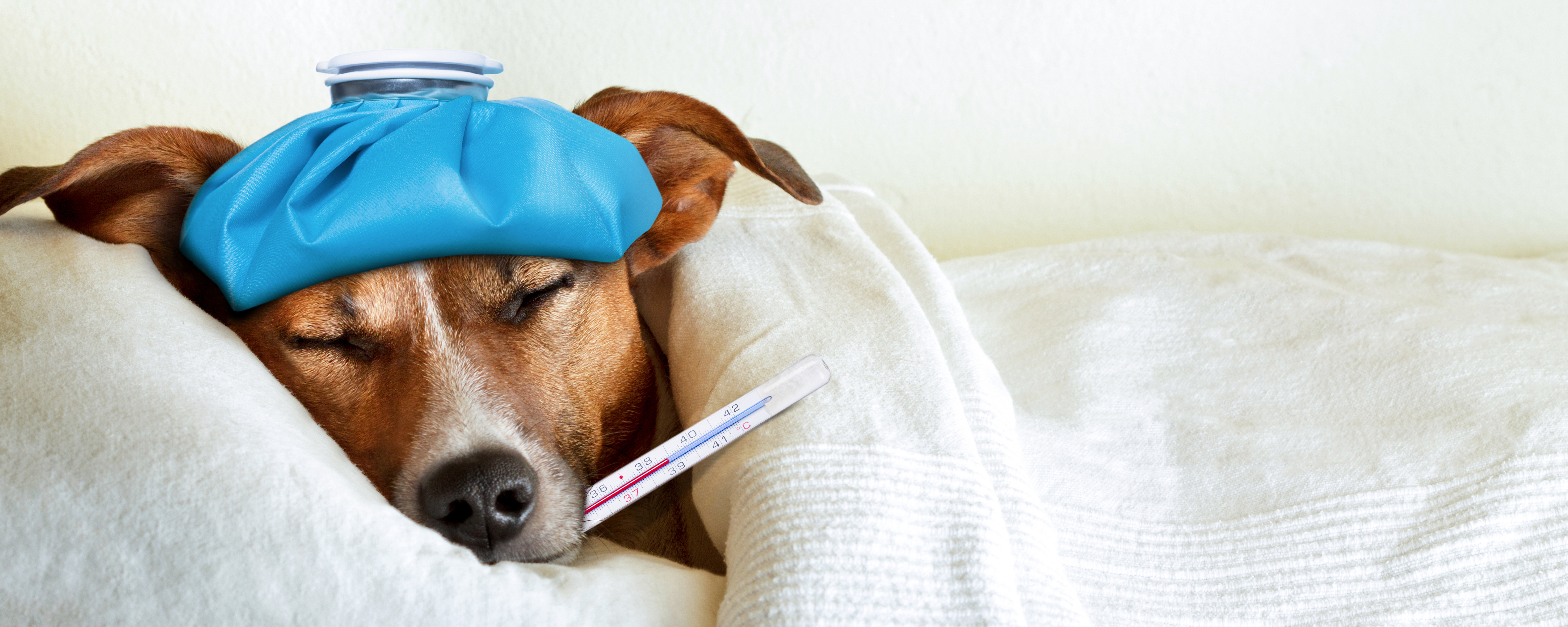 Italian woman wins case to be granted sick pay to look after ill dog